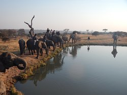 Camp Jabulani Elephant Experience
