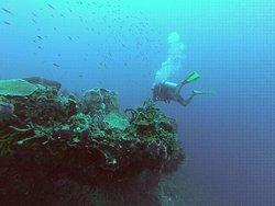 Kariba Plongee