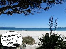 Coromandel Nature Tours