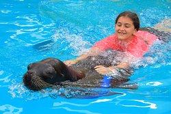 Nuevo Vallarta Sea Lion Encounter