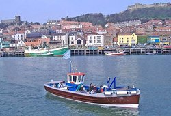 Queensferry Cruises - Wildlife Scenic Trips