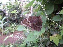 Schmetterlingspark Buchholz