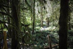 Wildwood Recreation Site