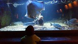 Musee Aquarium d'Arcachon