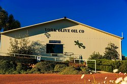 York Olive Oil Co