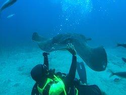 Submarine Safaris Tenerife