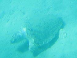 Yellow Submarine Zante