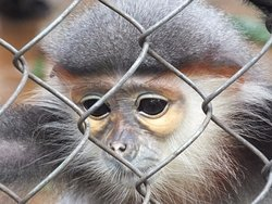 Endangered Primate Rescue Centre