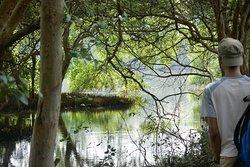 Wisata Alam Mangrove Pantai Indah Kapuk
