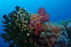 Napantao Marine Sanctuary