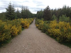 VisitScotland - Daviot Wood Information Centre
