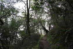 Huckleberry Botanic Regional Preserve