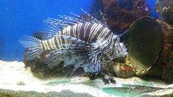 Guernsey Aquarium