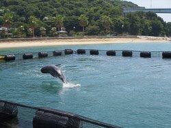 Dolphin Farm Shimanami
