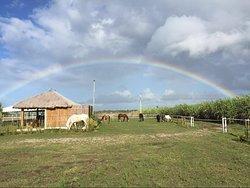 Happy Horse Farms Equestrian Center