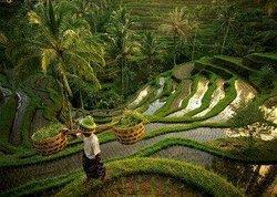 Trip To Bali Island
