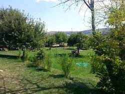 Ozbek At Çiftliği