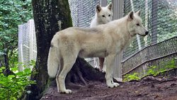 Adler und Wolfspark