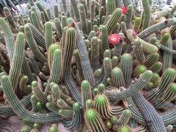 Experiencepark CactusOase