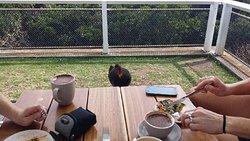 Lunch at Cape Byron with a bush turkey