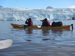 Svalbard Wildlife Expeditions