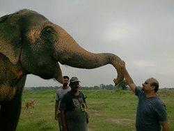 Elephant Conservation & Care Center