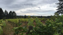 Township 7 Vineyards & Winery (South Langley)