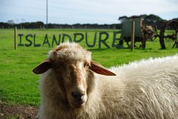 Island Pure Sheep Dairy
