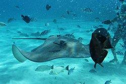 Aqua Safari Helmet Dive