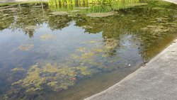 Pefferside Park