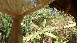 Alto Tambopata Lodge