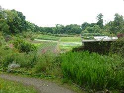 Islay House Community Gardens