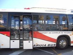 Karuia Bus