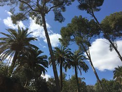 Palms in Park Guell