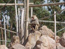 Ilha dos primatas