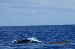 Dolphin and Whale Watching Expeditions