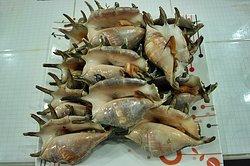 Ace Crab