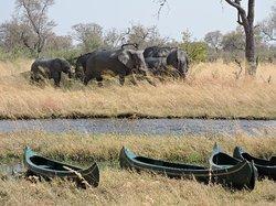 Anybody for an adventurous canoe trip?