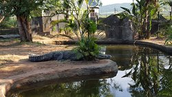 Perry's Bridge Reptile Park