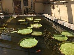 Giardino dei Platani