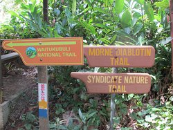 Syndicate Trail