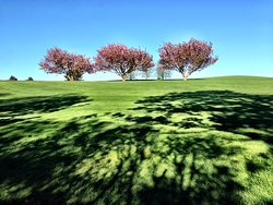 There are many golf courses nearby which bloom in spring with cherry trees.