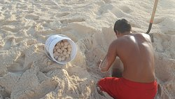 Harvesting Turtle Eggs to relocate for their hatching release (not sure this is kosher) but so c