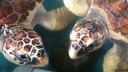 Our Turtle Conservation Project