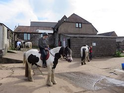 West Anstey Riding Stables