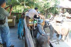 Cozy Bali Tour