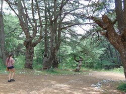 Hiking in the Cedars of God