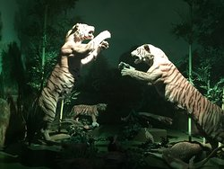 Museo de la Evolucion