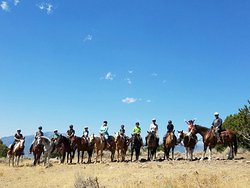 KB Horses