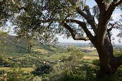 EVO del Borgo - Frantoio di Arquà Petrarca